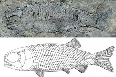 云南发现世界最古老肋鳞裂齿鱼类,为亚洲首现