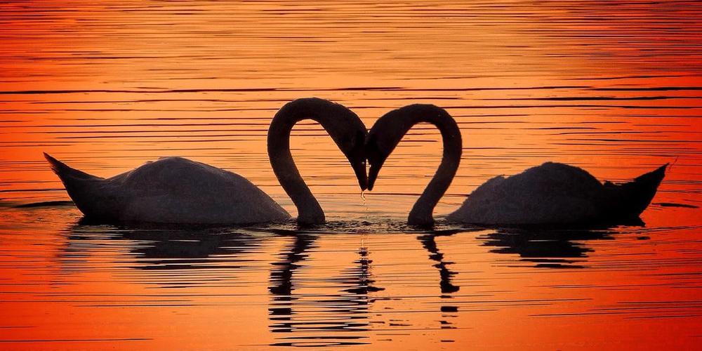 520来自动物的甜蜜爱心暴击 浪漫skr人了