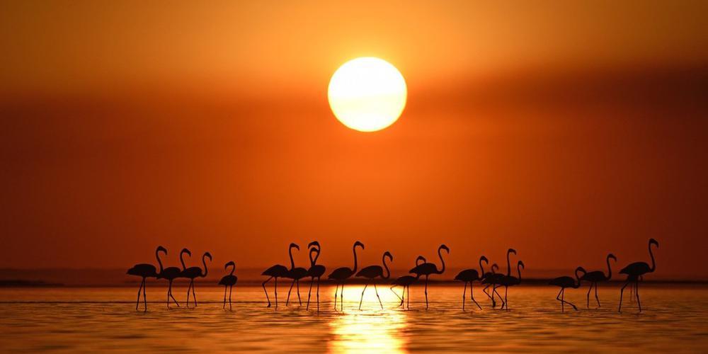 美得富有诗意 夕阳西下的火烈鸟怎么看都不够