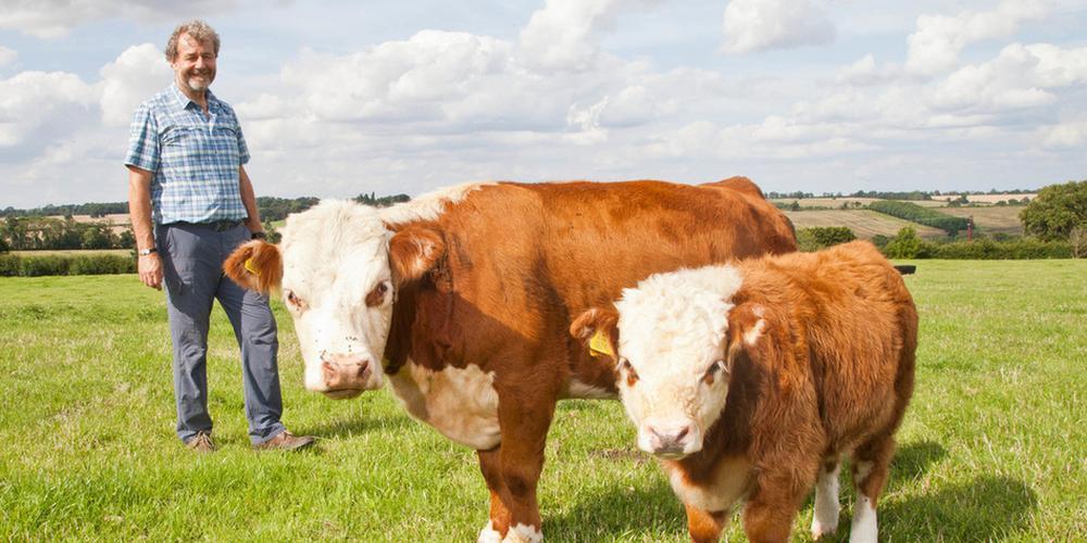 罕见迷你奶牛身高仅一米:模样呆萌可爱