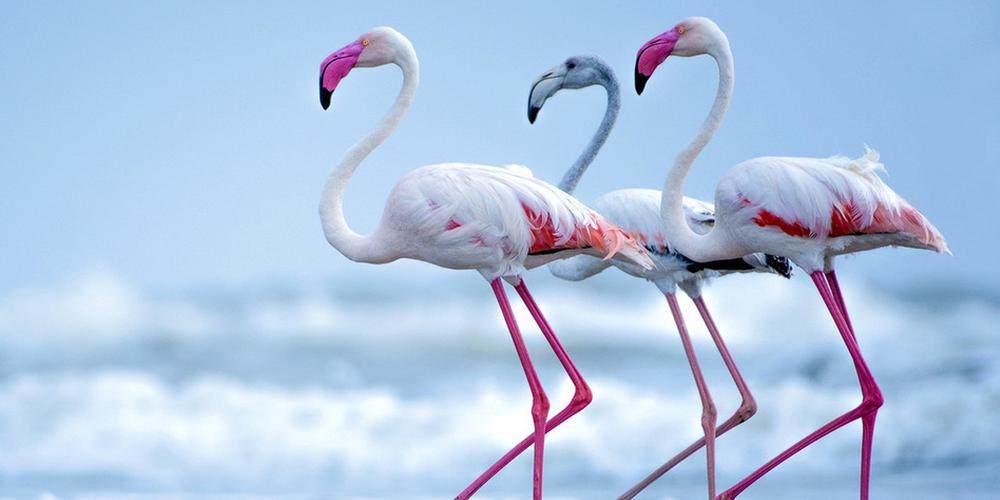 动物界的神仙颜值 又美又萌真的不是小精灵吗?