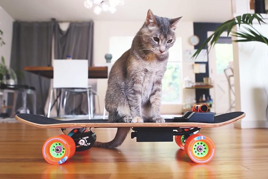 喵星人也要玩滑板:猫咪专用电动滑板问世
