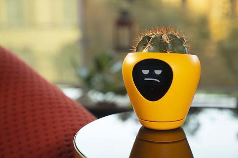 咦?现实版的「妙蛙种子」?植物也可以萌哒哒