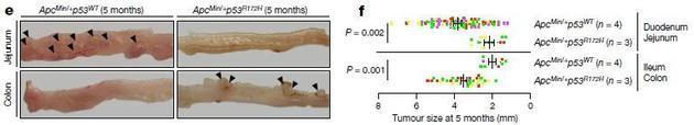 """意外!这种""""抗氧化""""成分竟可能促进常见癌症的发生?(图3)"""
