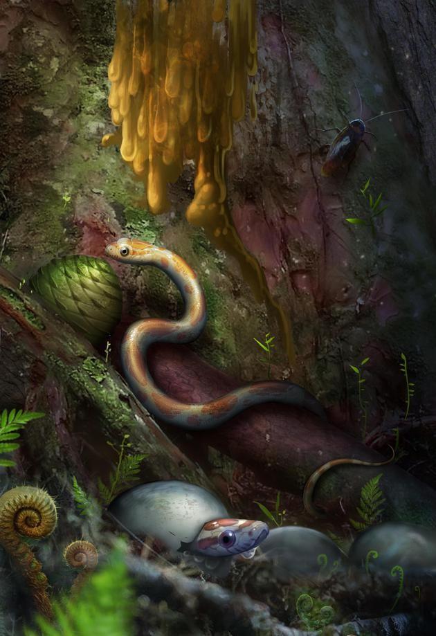 缅甸晓蛇复原图 绘图刘毅