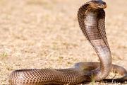 无人驾驶挺火,隔壁的机器蛇怎么样了?