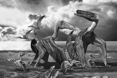 新疆哈密首次发现三维翼龙胚胎化石