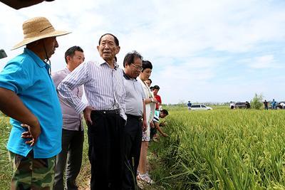 袁隆平:拟3年研发亩产三百公斤杂交稻