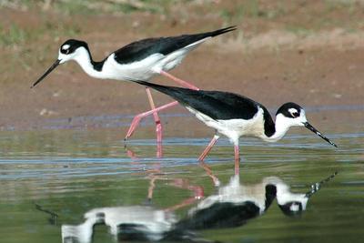 西藏首次发现鸟类足迹化石:大一新生意外发现
