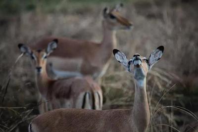 用数据说话:战争对野生动物造成的巨大伤害