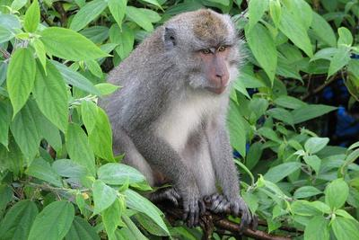 佛罗里达州猴子体内发现致命病毒 科学家建议勿接触