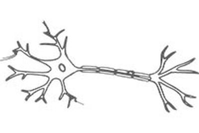我国利用冷冻电镜成功解析神经突触超微结构