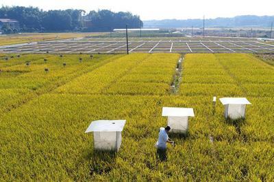 养活13亿人的耕地已不堪重负 应立法保护耕地质量
