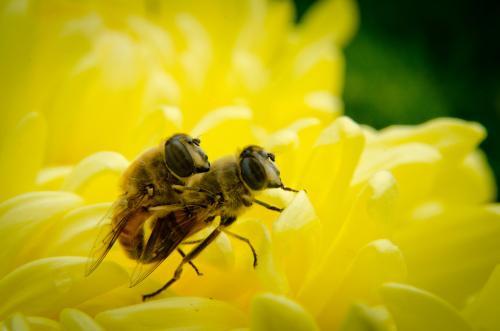 动物们的奇葩性爱 蜜蜂射精后即死亡