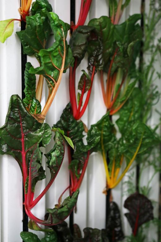 """""""货运箱农场""""主要生长多叶绿色农作物,例如:生菜和瑞士甜菜,因为它们生长速度较快,并且能够紧密地生长在一起。"""