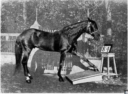 """""""聪明汉斯""""正在用蹄踏地板的方式给出了以下几个数学题的答案:8-4=4、8+4=12、8/4=2和8×4=32。"""