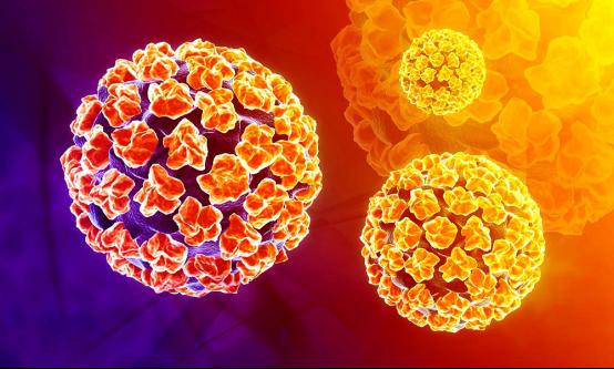 ▲HPV病毒是一种非常常见的病毒,大多数情况下不会造成健康问题。(来源:Allpathy)