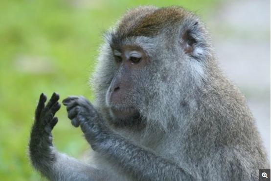 一些猴类显示出计数物体的能力