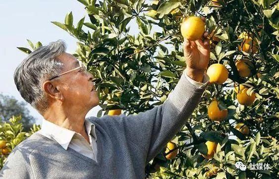 90岁褚时健告诫创业者:年轻人不要太心急