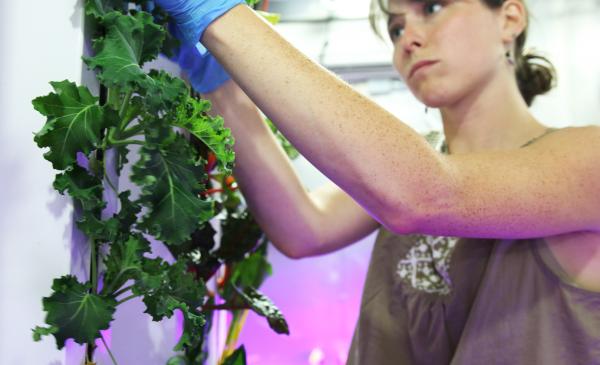 """杰米·西尔斯坦(Jaime Silverstein)每天在""""货运箱农场""""工作,监控农作物的生长情况。"""