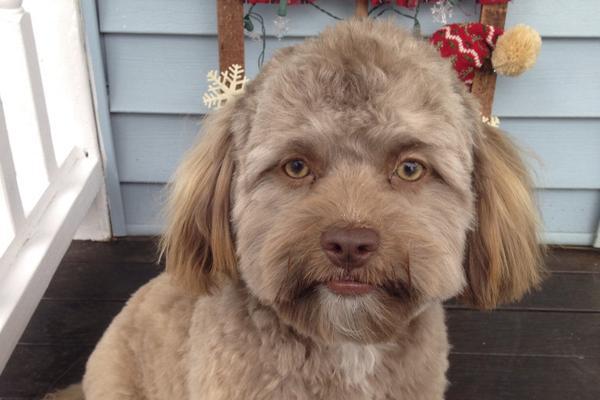 狗狗长了张人脸是什么体验?主人分享宠物照片吓坏网友