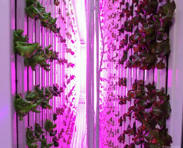 图中是在货运箱中用LED灯照射多叶绿色植物。