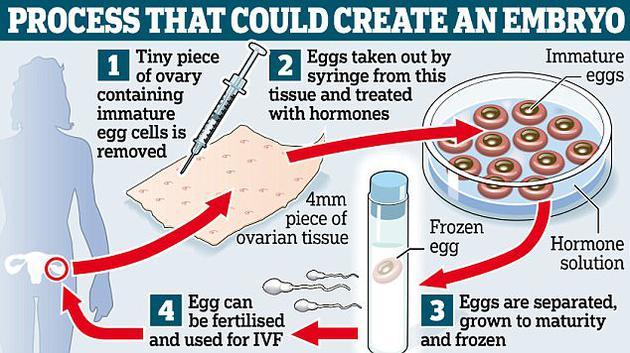 英国科学家研发的一项新技术或能帮助存在生育问题的女性成功受孕。