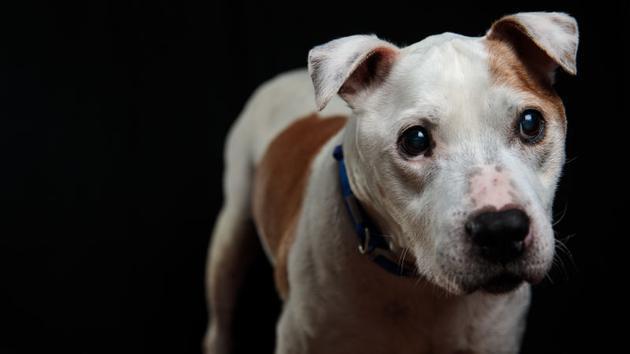 狗狗是上天的恩赐,但狗会咬人也是必须面对的事实。