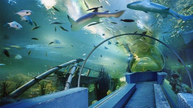 如果海洋继续趋暖未来300年捕鱼量将减少20%