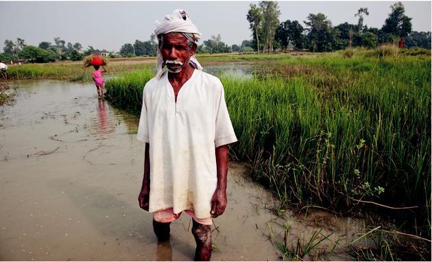 這位農民種植的綠色超級稻與潛水大米,是為耐受極端天氣而培育出的作物