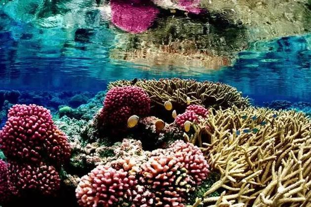 珊瑚生长模式并不随机 或有帮助于修复珊瑚礁