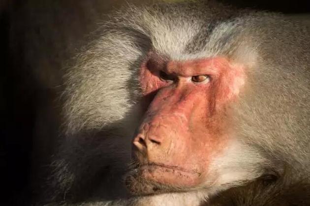 经过漫长的演化,一些动物在繁殖期间却表现得恨不得让全世界都知道它们的性偏好。