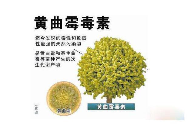 科学大家|普洱茶中到底有没有致癌物黄曲霉素?