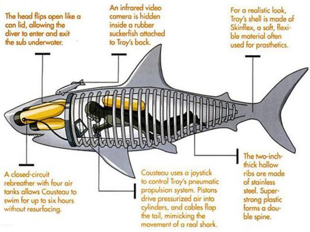 特洛伊鲨鱼,2005年6月