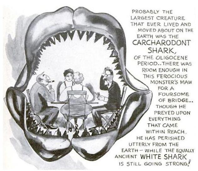 巨大的鲨鱼牙齿,1937年5月