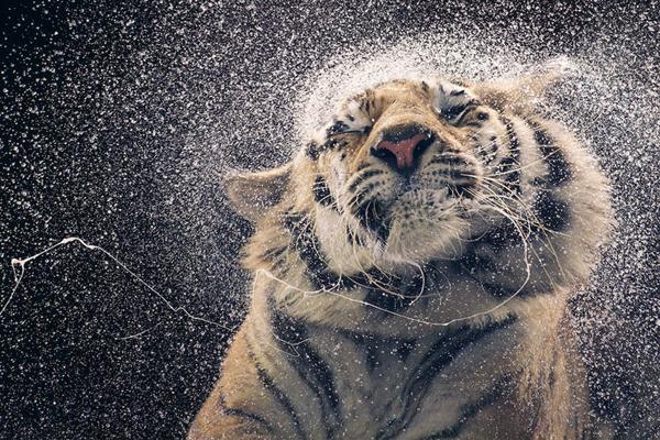 关注珍稀动物唤起怜悯之心 充满人性的动物肖像