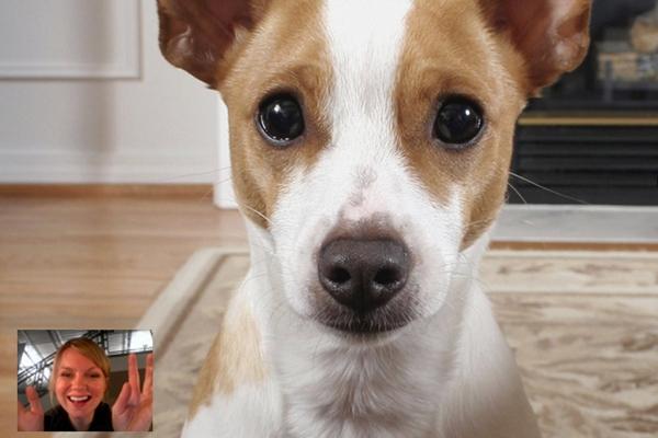 你离开家的时候 这款相机能让宠物不再孤独