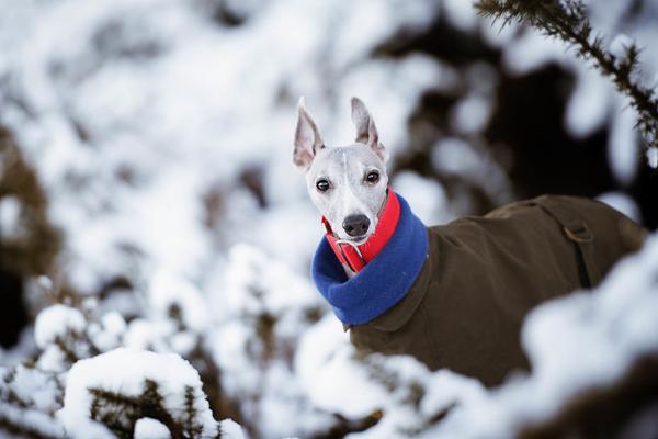 发现狗狗的灵魂与天性 自在奔跑的俊朗身姿