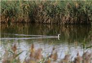 大港湿地 鸟飞潮涨