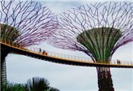 新加坡的超级树