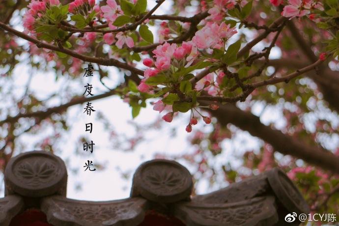 图为AV在线视频wwwrenrenav99com 阪本丽娜黑人护士高清图片