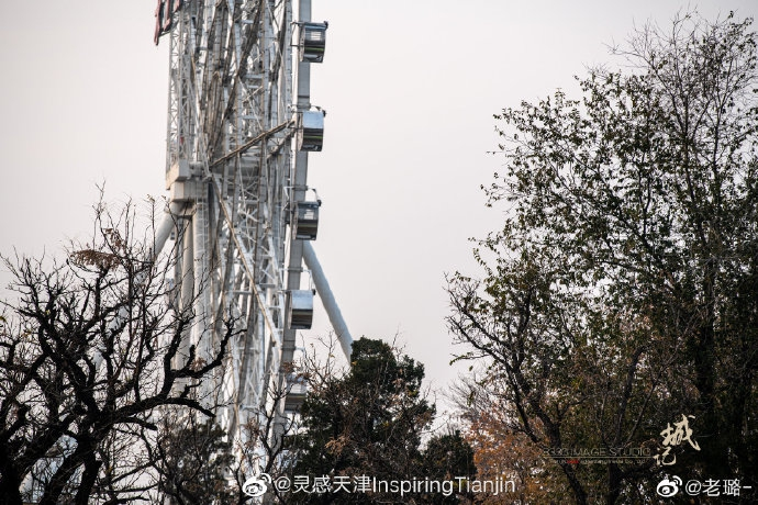 天津·水上公园冬日小景
