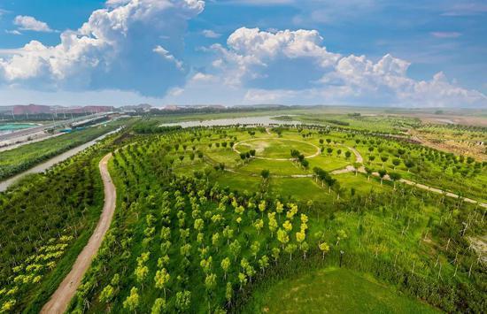 体验丛林穿越!天津这片打卡地美翻了!
