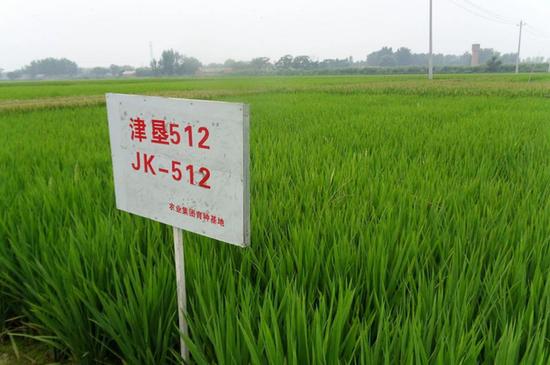 从田间到餐桌 黄庄洼米业始终坚持营养健康理念