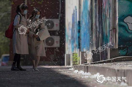 """图为北京市海淀区中央民族大学附近,杨絮纷纷,犹如飞""""雪""""。(拍摄:王晓)"""