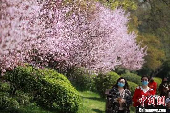 """资料图:市民""""带着口罩""""赏春光。 孟德龙 摄"""