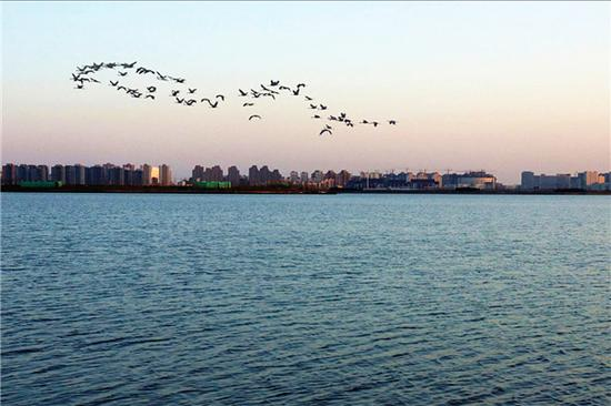 昔日污水库变身生态湖 鲜花围绕海鸥翱翔