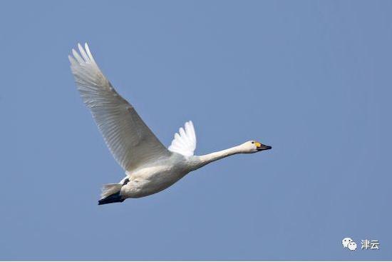 万鸟云集北大港,它们的热情可真难挡!