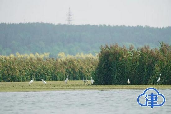 天津野生鸟类已达200余种 生物多样性逐渐恢复