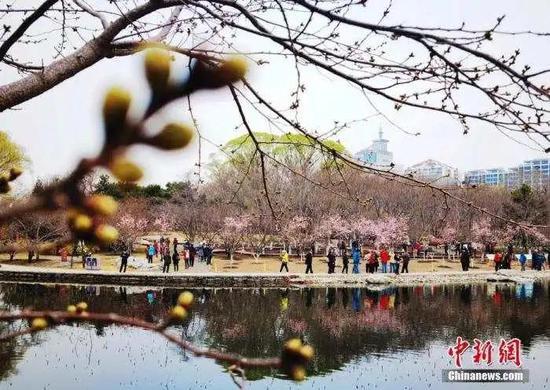资料图:3月18日,市民和游客在北京玉渊潭公园观赏樱花。中新社记者 杜洋 摄